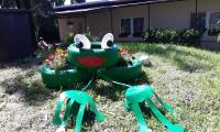 slečna žaba