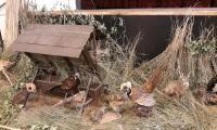 výstava vtákov